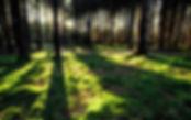 plantasnativas-viveroscomallejpg.jpg