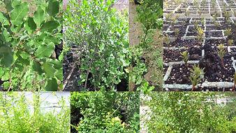plantasforestalesynativas-viveroforestal
