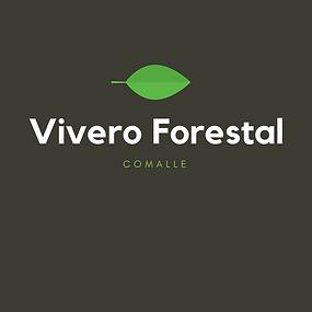 viveroforestal-plantasdeeucaliptus-plantasdepinos-viveroscomalle