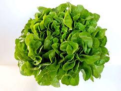 Verdurasorganicas-verdurasviveroscomalle.jpg