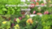 compra de plantas online.jpg