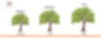 plantas-cerezos-viverosdecerezos-vigorpo