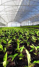 plantascerezos-plantascerezas-plantasdecerezosenmacetas-viveroscomalle