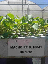 plantinesdehortalizas-almacigosdehortalizas-viverodehortalizas--viveroscomalle