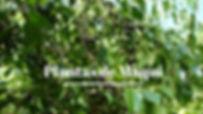 plantasdemaqui-viverosdemaqui-viveroscom