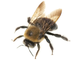 Leave Me Bee...Carpenter Bees!