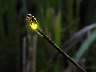 LMBPC: #TBT #Lightning Bugs!