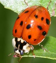 Home Invaders: Lady bugs!