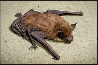 LMBPC: Bat Exclusion