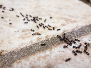 LMBPC: Slab Ants...is it Summer Yet?!