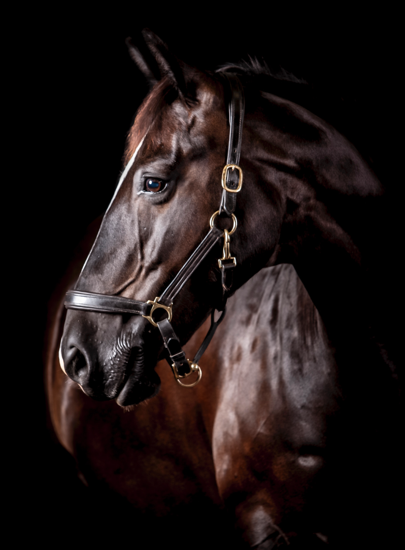 Equine photographer in southampton, the best equine photographer, the best horse photographer, love horse photography, experienced horse photographer