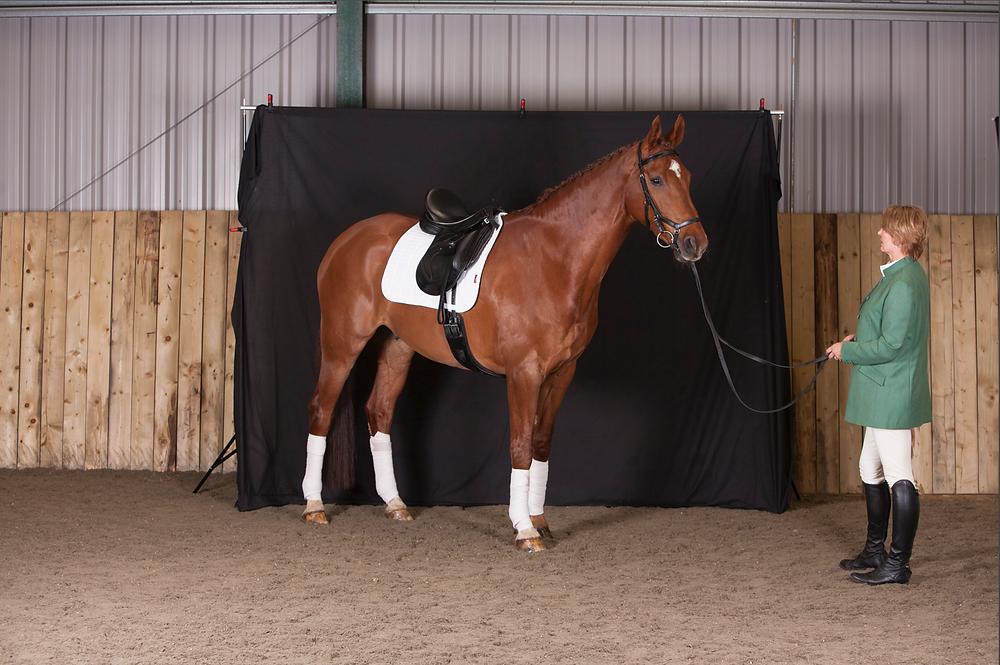 Equine / horse photography portrait southampton