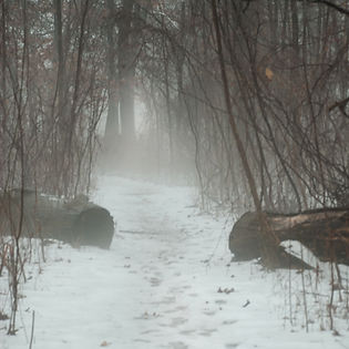 fog-in-the-woods.jpg