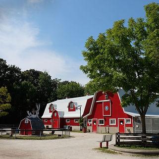 Canatara Park Animal Farm