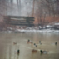 fog-and-ducks.jpg