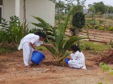 Nourishing the coconut tree
