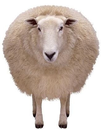 U-POO Sheep Manure