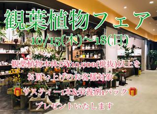 観葉植物フェア開催!