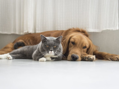 Sustainable Pet Owner, what should I know?