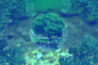 environmental-protection-326923_1920_edi