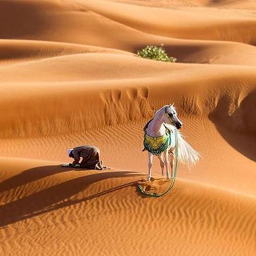 desierto yegua 1.jpg