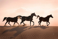 desierto .jpg