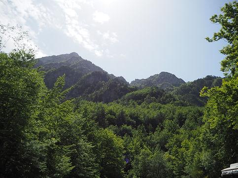terapie forestali teffit.JPG