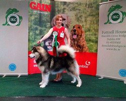 We had a great day at the Dublin Dog Show yesterday