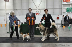 Tyson after winning Reserve Best in Show