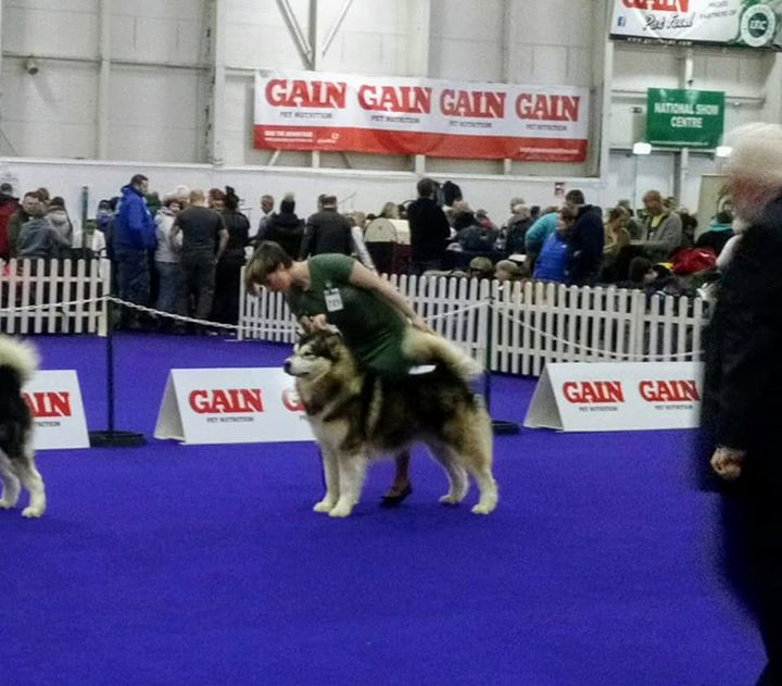 Tyson on the way to his Greenstar and CACIB win
