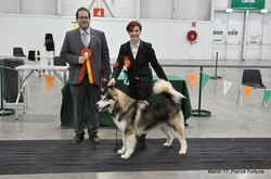 Tyson after winning reserve Best in Show with our judge Mr J Anderson