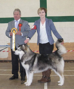 Kishdigra Smooth Criminal going BEST PUPPY IN SHOW
