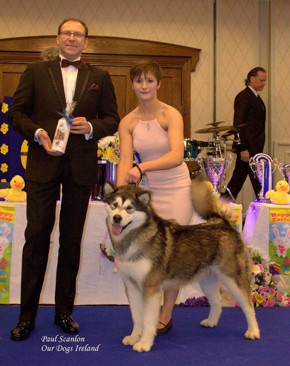 Hera, first Malamute ever to compete at POTY