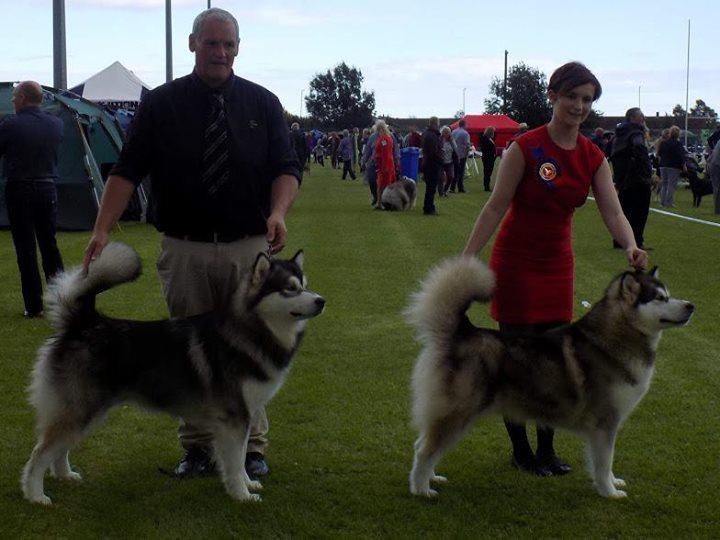 Sura going best of breed with her younger brother Tyson going reserve