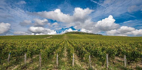 Vigne-Chablis-bourgogne-1091348522_2000p