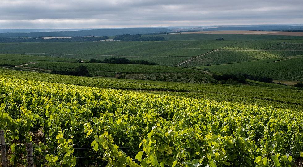 Panorama depuis les vignes de Chablis