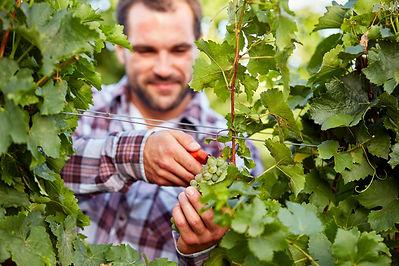 Vigneron Vitivalor Solutions