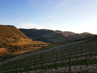 La vigne sous le soleil de mars