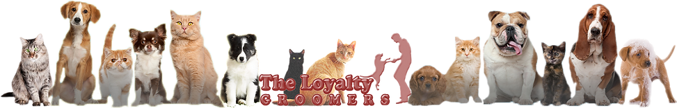 My company logo and dogs also cats on the background