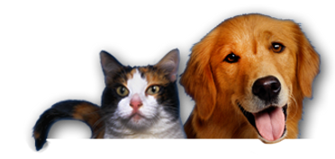 cat-dog-home-top-2.png