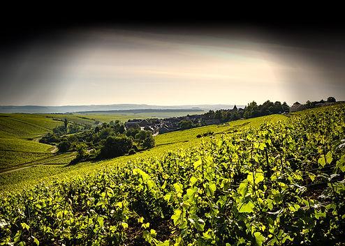 Vue sur le Domaine Martin depuis les vignes