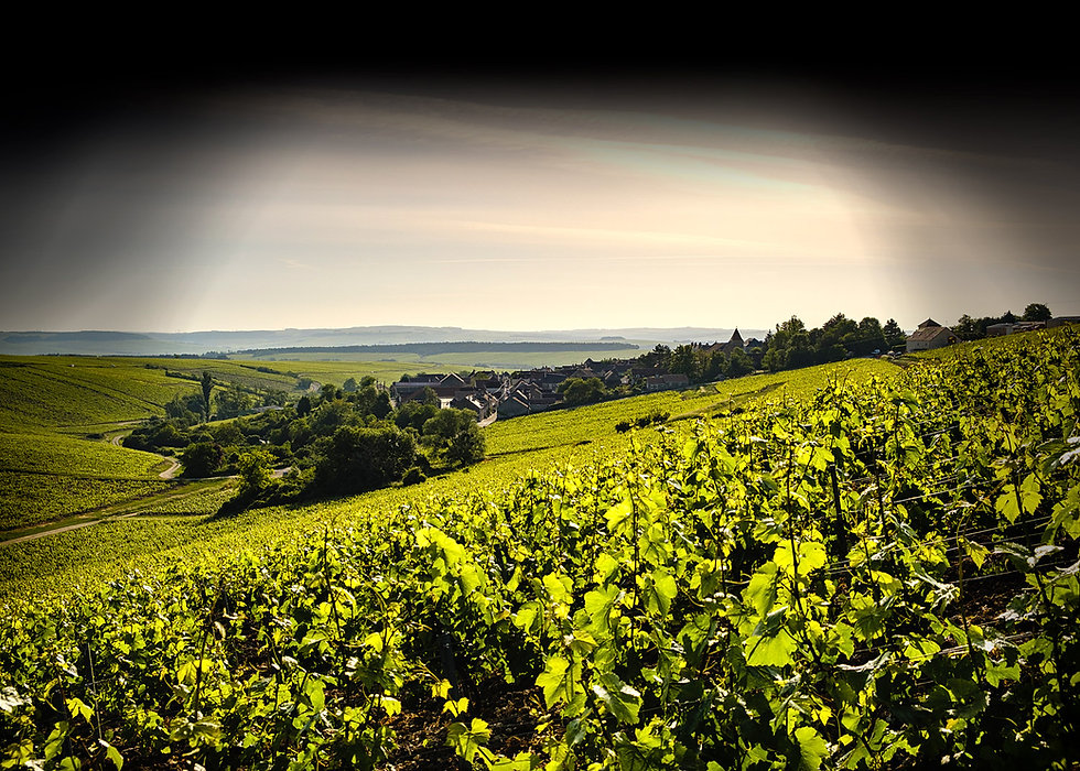 Vue du village de Courgis depuis les vignes