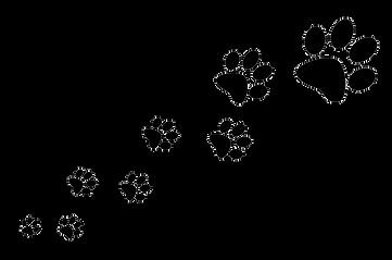 Doggy Daycare Epsom