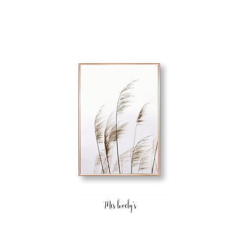 Pampas in the Wind