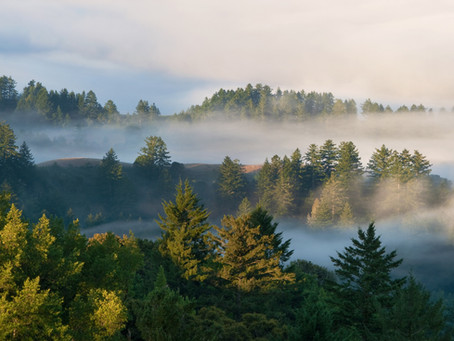 Hidden in Plain Sight: the John Nicholas Trail's Cultural Landscape