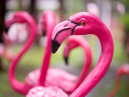 The Colorful Curmudgeon Pink Flamingo Awards