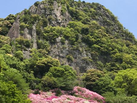 Landscape Uses for Ornamental Plants