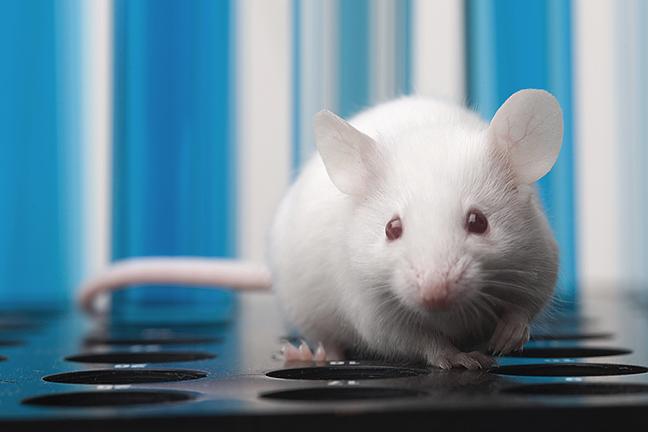 dirty-mice648x432