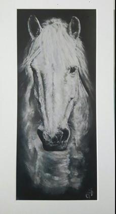 grey-stallion