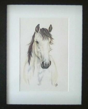 connemara-pony